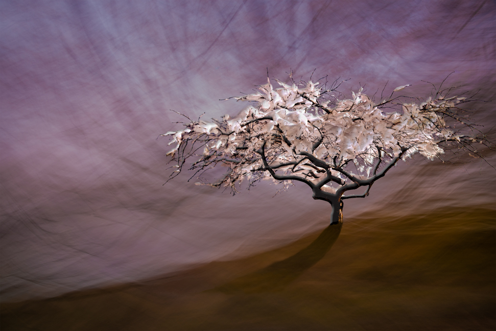A snow laden tree Re-Imagined to sit in an abstract purple and brown landscape