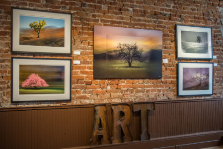 5 tree pictures in the exhibition in the Studio gallery